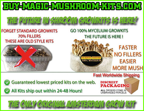 Magic mushroom grow kit cheap lowest price