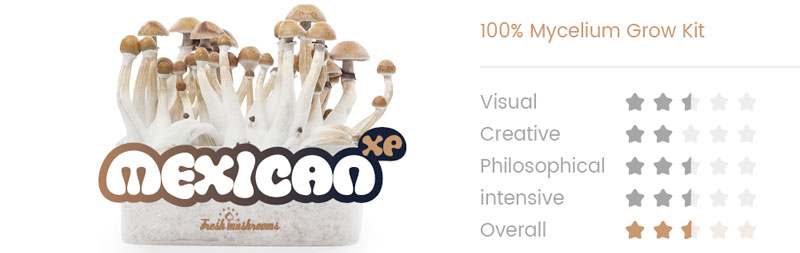 Mexican cubensis Magic Mushroom Grow Kit