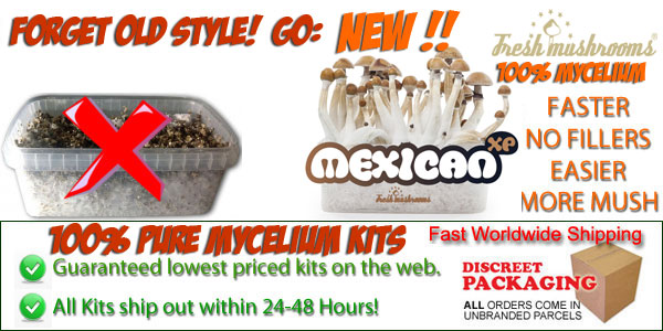 Buy magic mushrooms mycelium grow kits