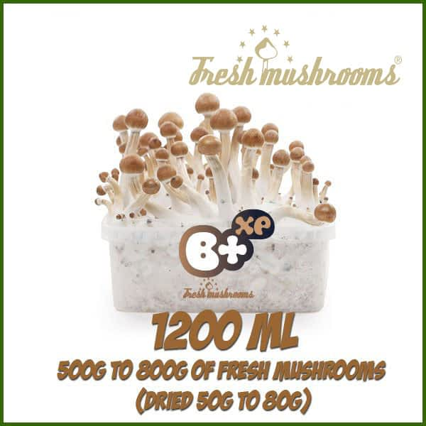 B+ 1200ml kweekset Freshmushrooms