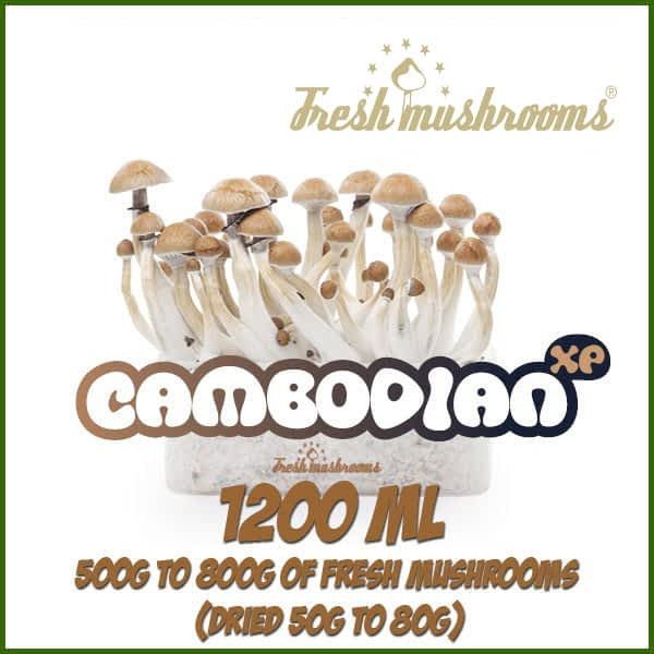 Cambodian 1200ml Grow Kit Freshmushrooms mycelium