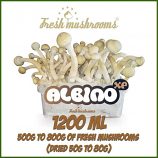 Albino A 100% mycelium Grow Kit
