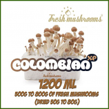 Colombian 100% mycelium Grow Kit