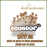 Ecuador 100% mycelium Grow Kit