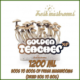 Golden Teacher 100% mycelium Grow Kit