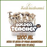 Golden teacher grow kits freshmushrooms